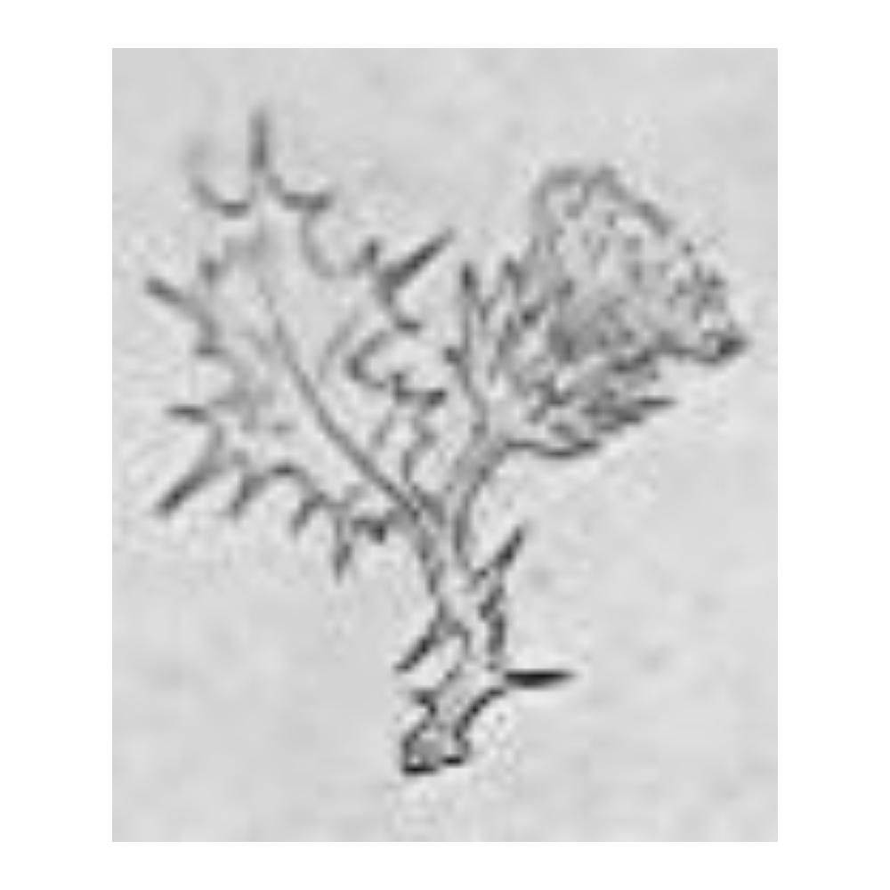 Associació Cultural Flor de Card